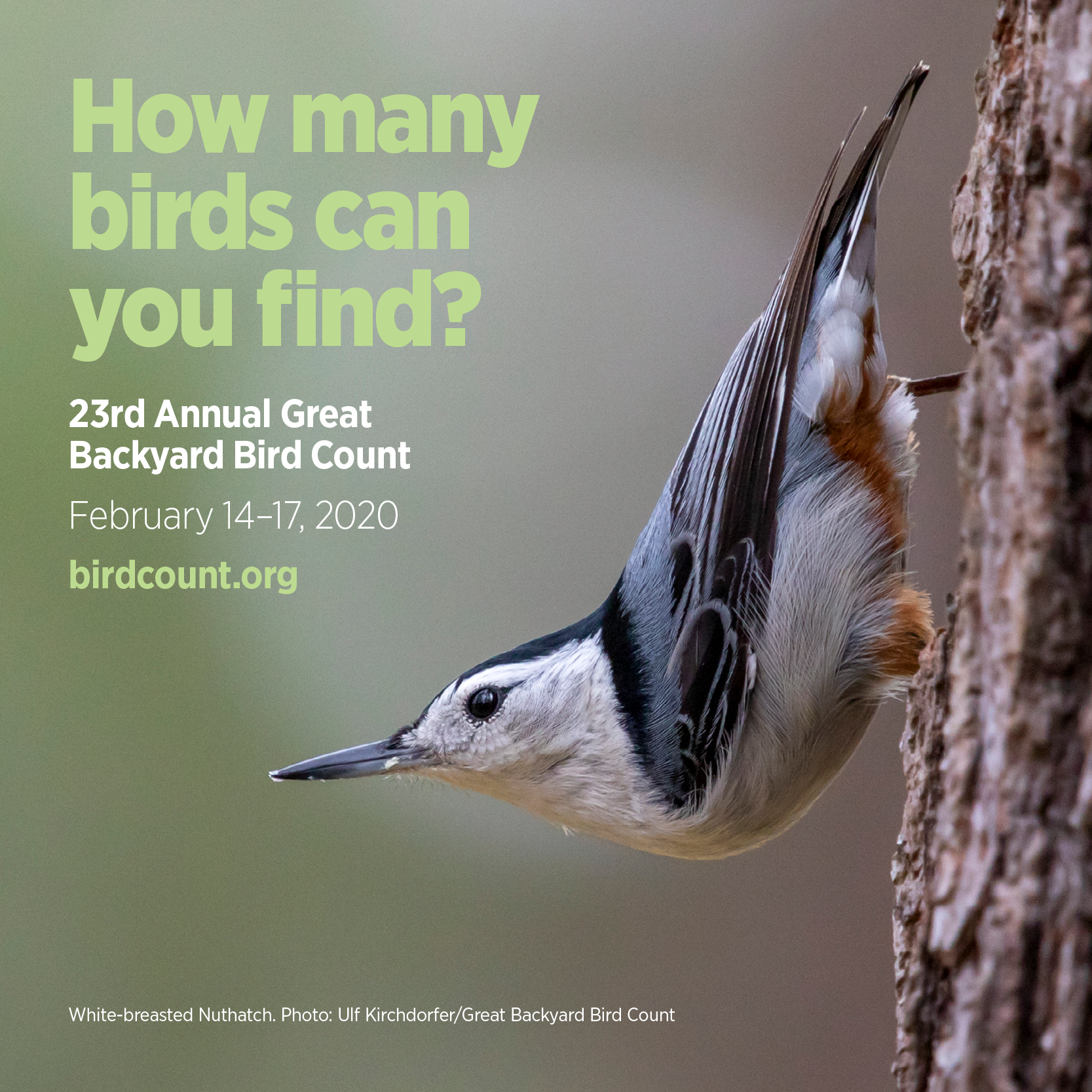 Back Again: The Great Backyard Bird Count - Tour Collierville